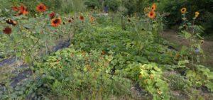 Approche(s) de la permaculture