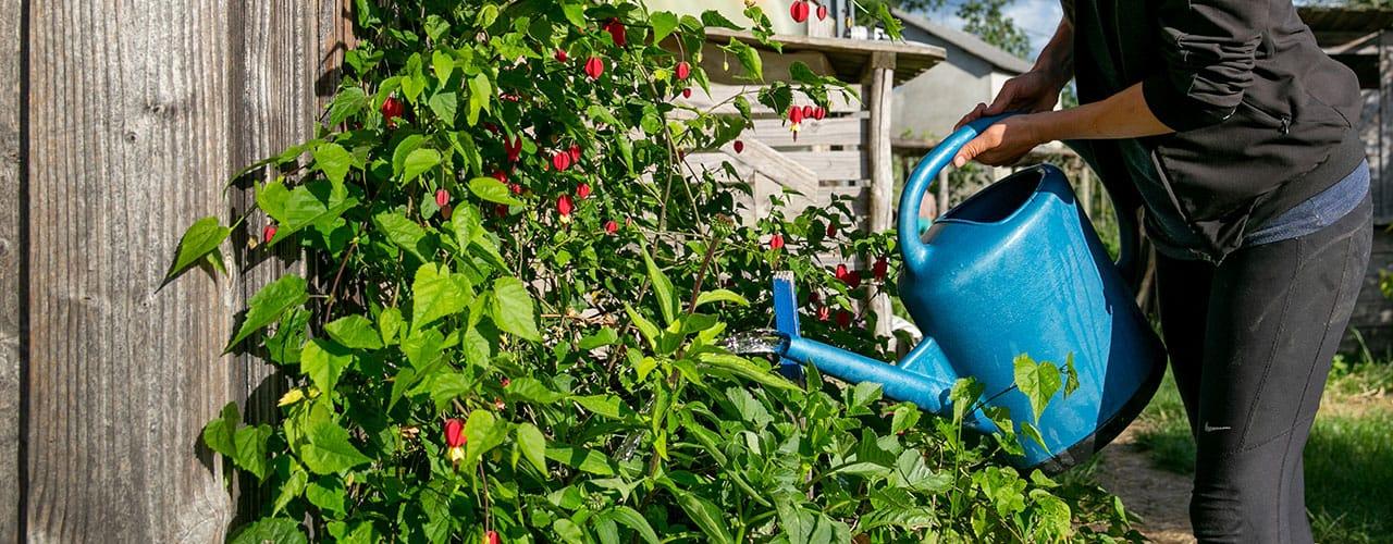 Economie d'eau au jardin