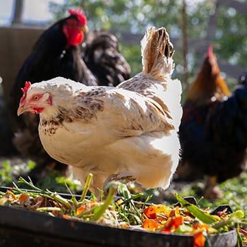 Concevoir son projet d'agroécologie vivrière