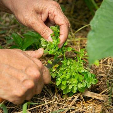 Débuter au potager agroécologique