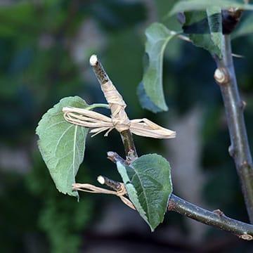S'initier à la multiplication des plantes