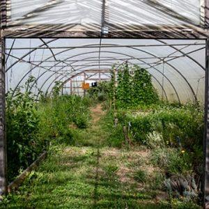 Jardin en agroécologie