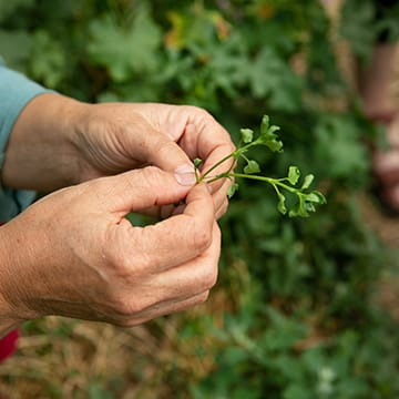 Jardiner en milieu sec