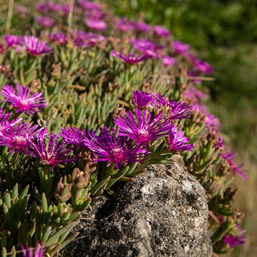 S'initier aux plantes bio-indicatrices