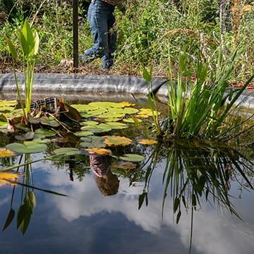 Préserver la ressource en eau au jardin