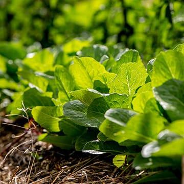 Reussir son potager agroécologique