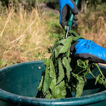 Soigner ses plants potagers
